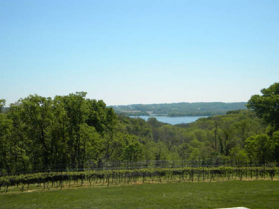 vineyard_w_view.jpg.w560h420.jpg