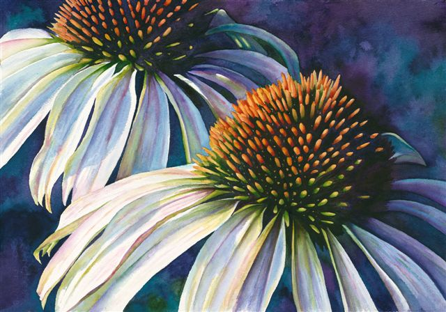 CONEFLOWER - SOLD - GICLEE PRINTS AVAILABLE