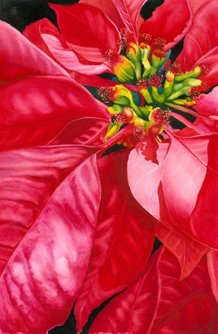 "POINSETTIA - 15x22"" - watercolor"