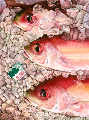 "RED SNAPPER - 22x30"" - watercolor"