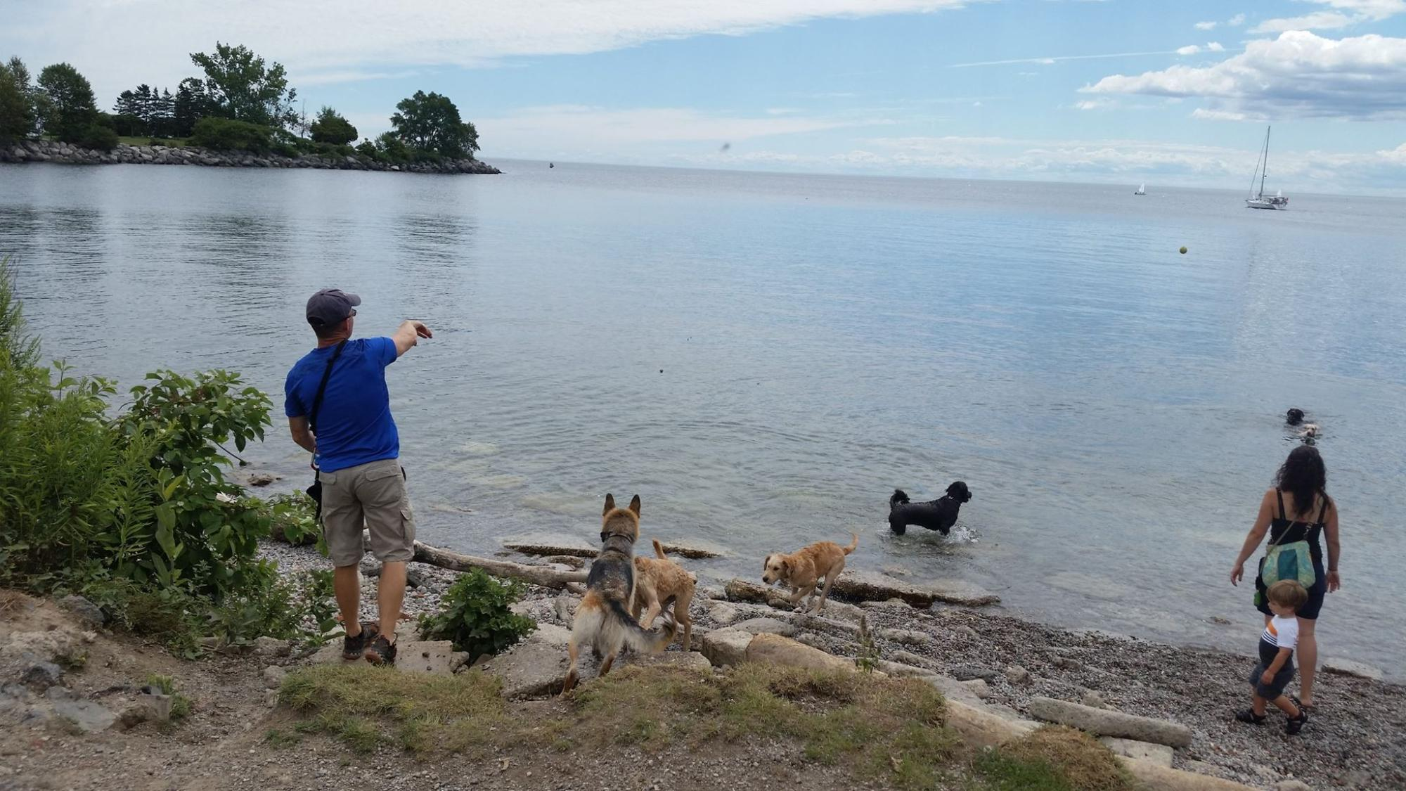 002a-Dog-Walker-Dan-With-Dogs-Off-Leash-Swimming.jpg