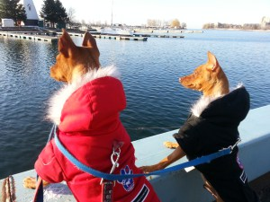 Two-Dogs-With-Jackets-On-Looking-Out-Across_Lake-Ontario-And-Parkland-2014-04-16-morning.jpg