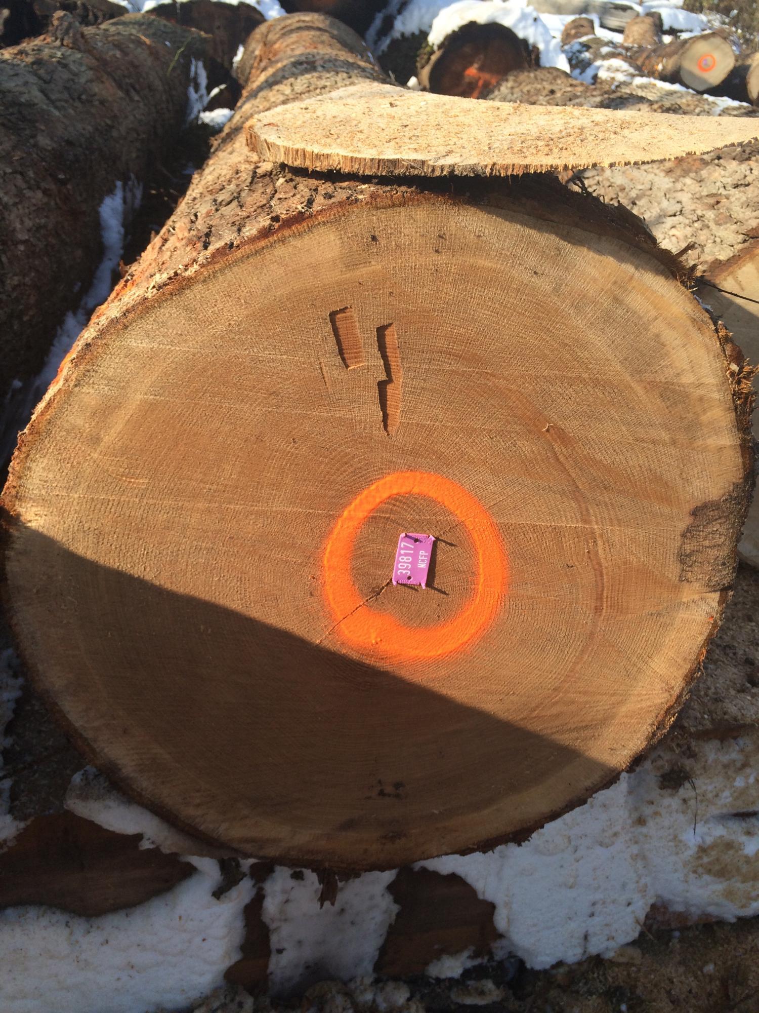 NCFP White Oak Rift Veneer Log