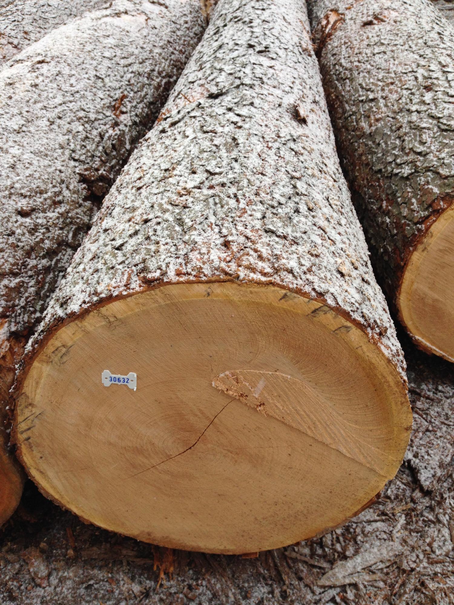 NCFP Cherry Veneer Log
