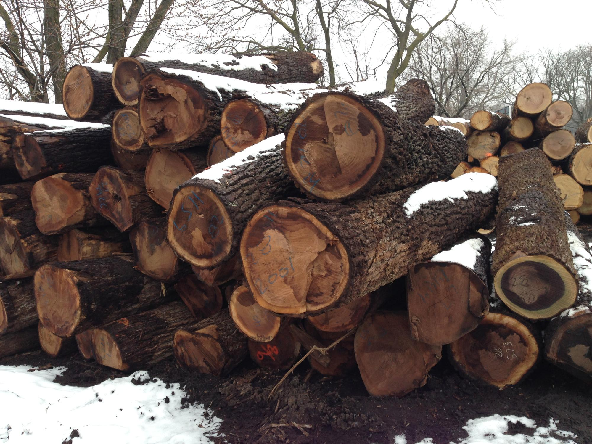 NCFP Walnut 2SC/3SC mix  Sawlogs