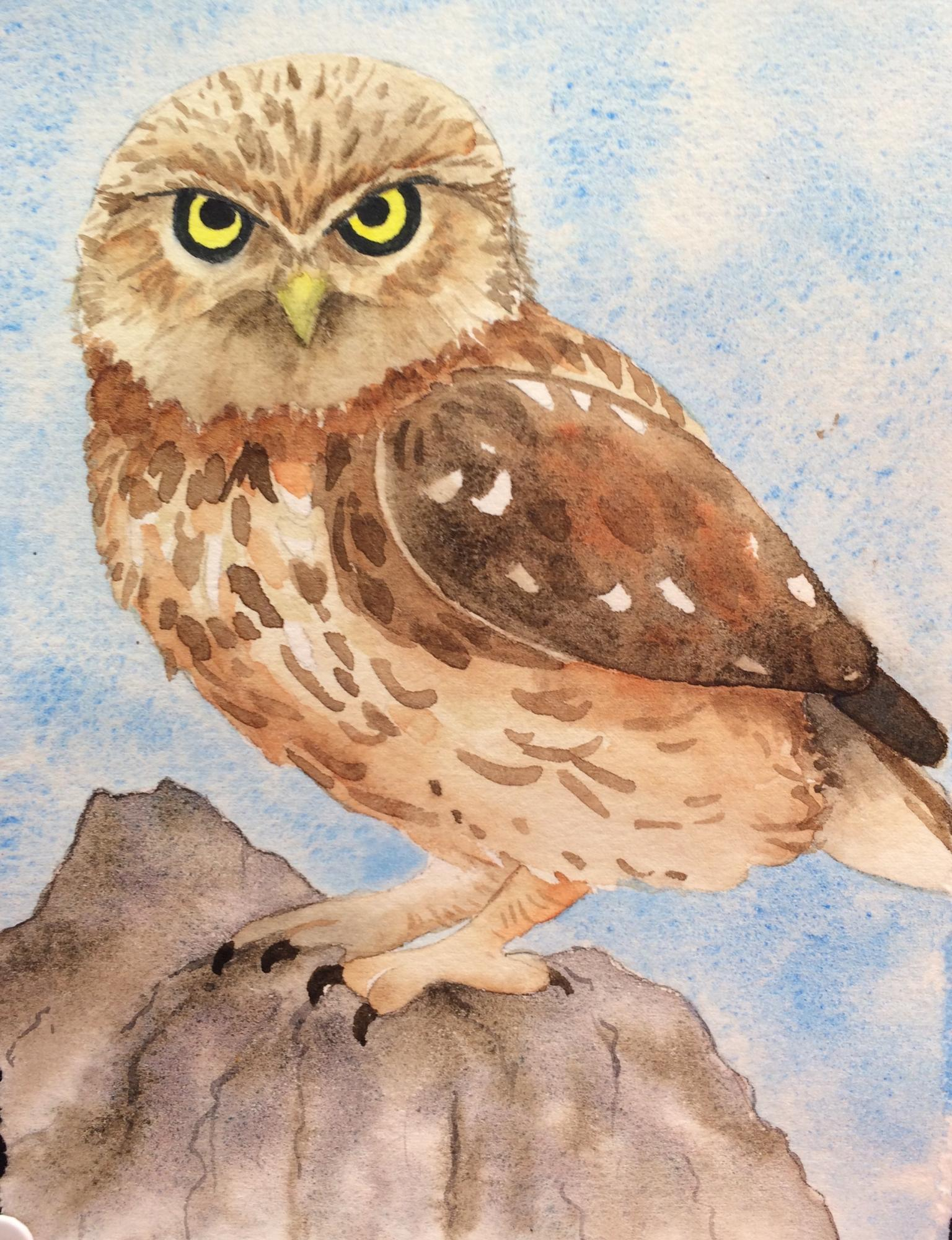 Little Brown Owl