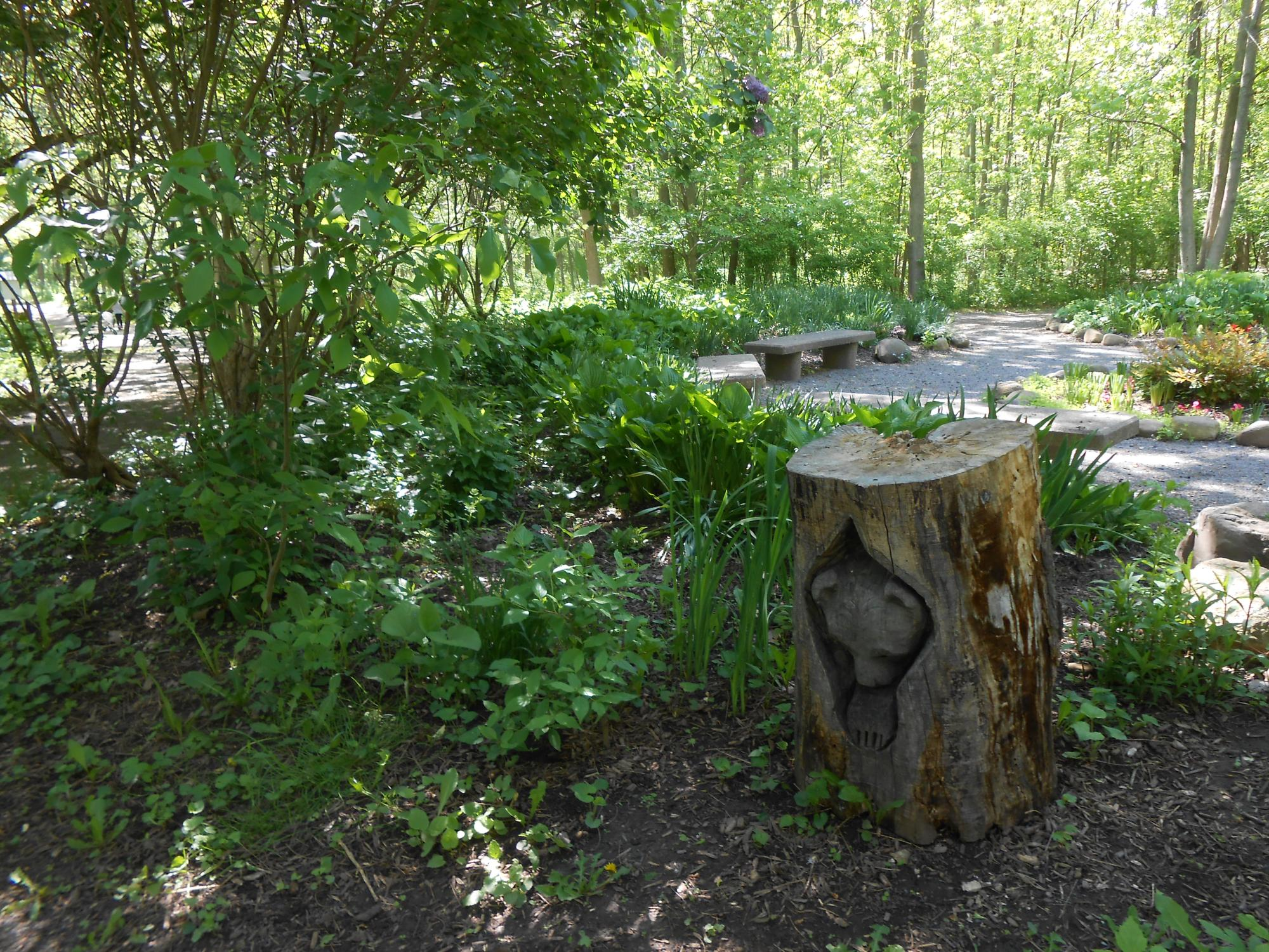 2015_raccoon_stump005.JPG