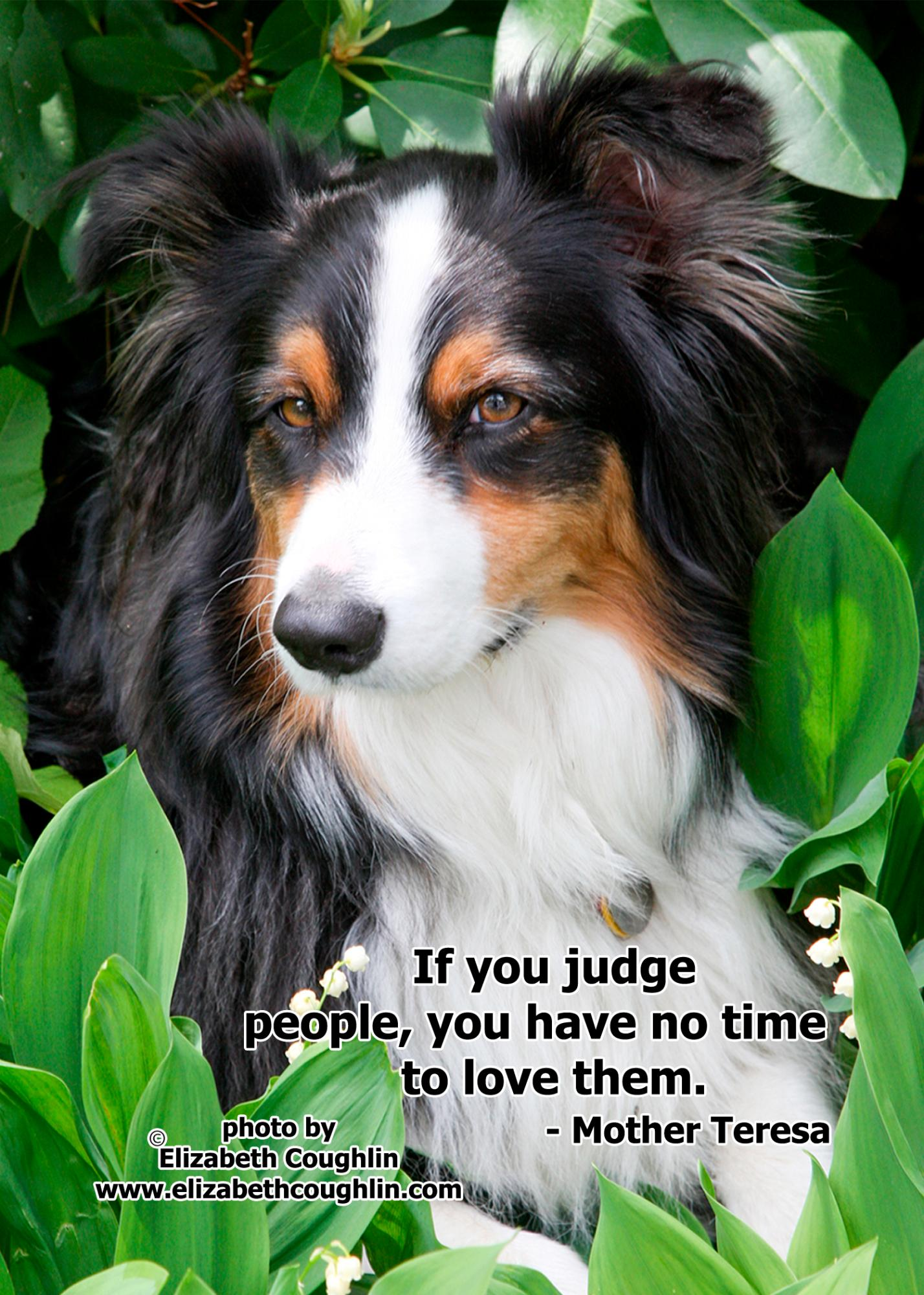 DOG_ifyoujudge.jpg