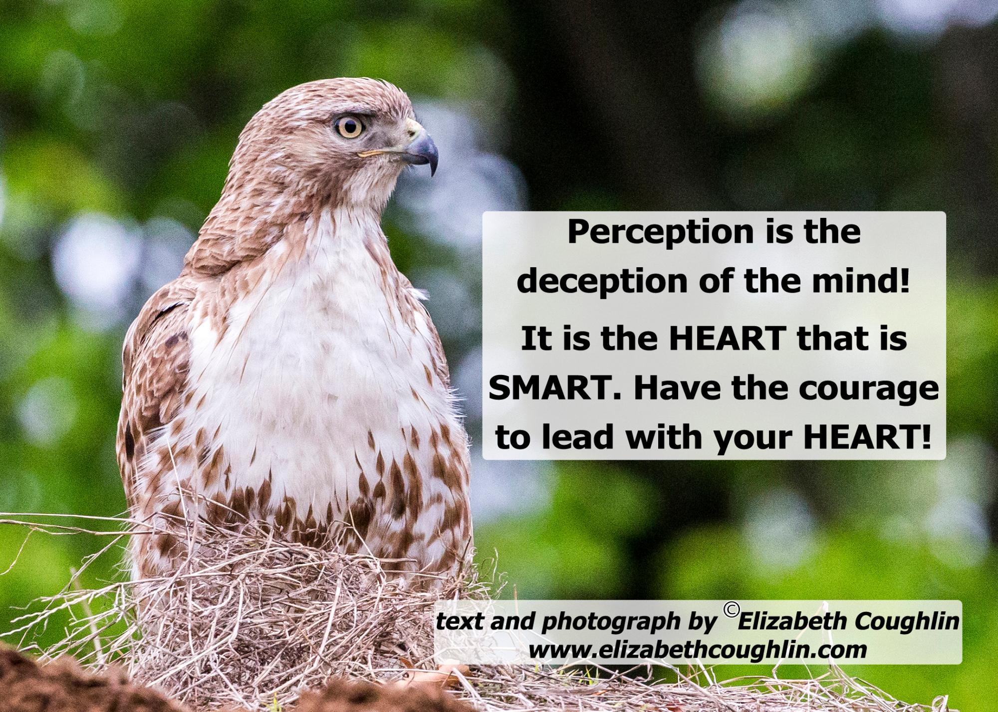 Hawk_Perception21987.jpg