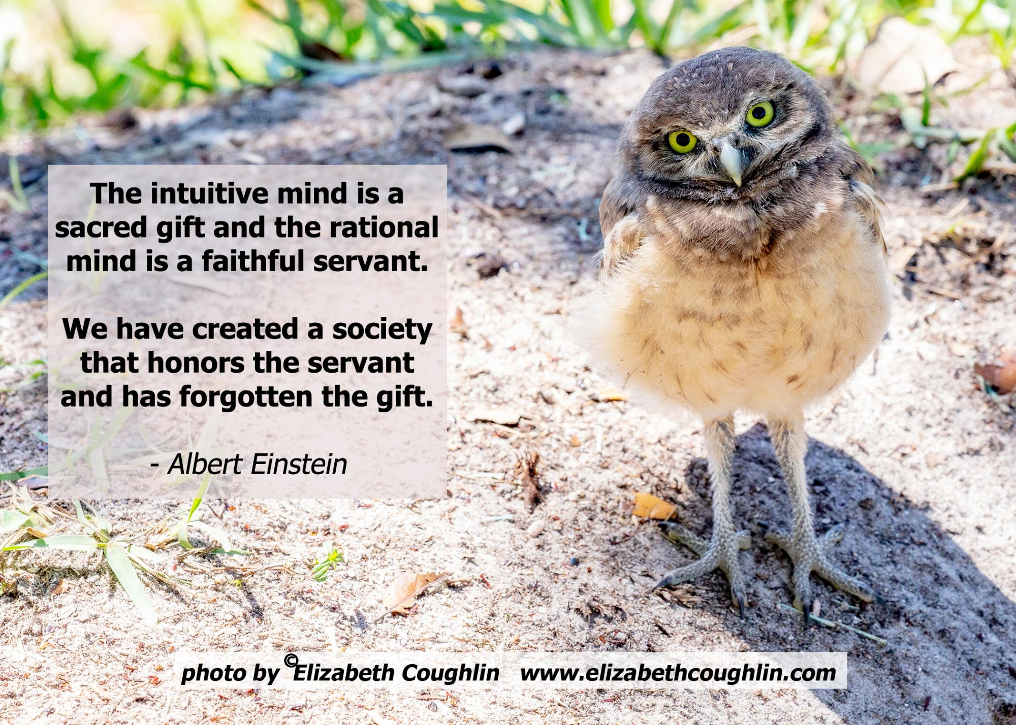 OWL_Burrowing_Einstein_intuitivemndisgift.jpg