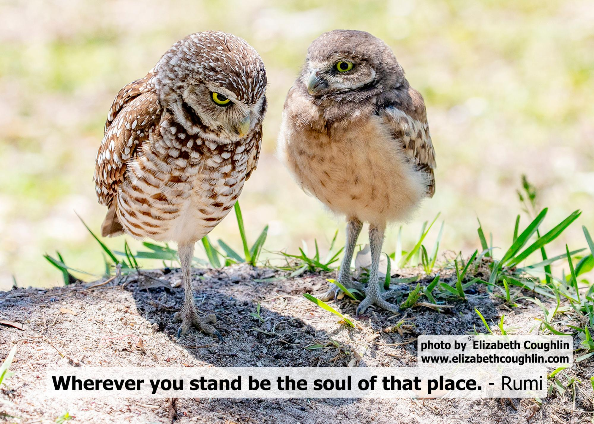 OWL_Burrowing_whereveryoustand.jpg