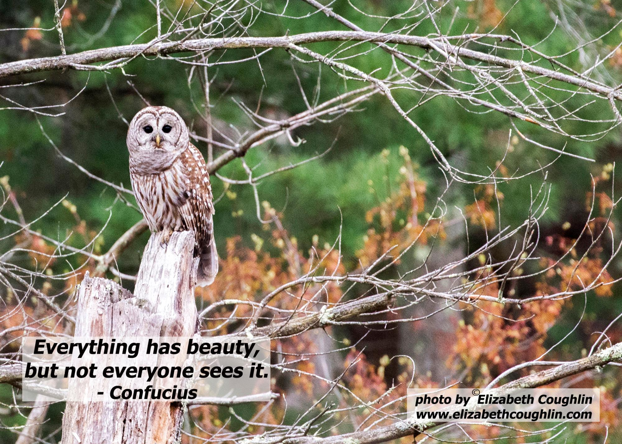 Owl_BarredOwl_EverythingHasBeauty.jpg