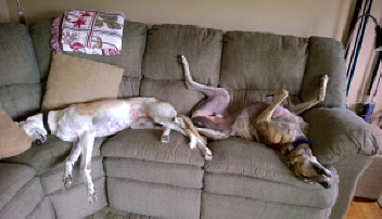 Jade_sharing_the_sofa_with_friend_Jake_Apaliski_opt.png