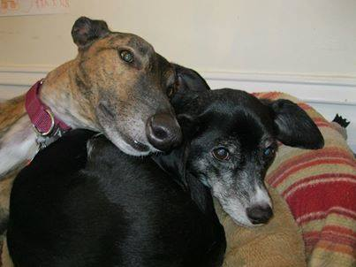 Tiny_(Greyhound) and_Tippy_Saylor.jpg