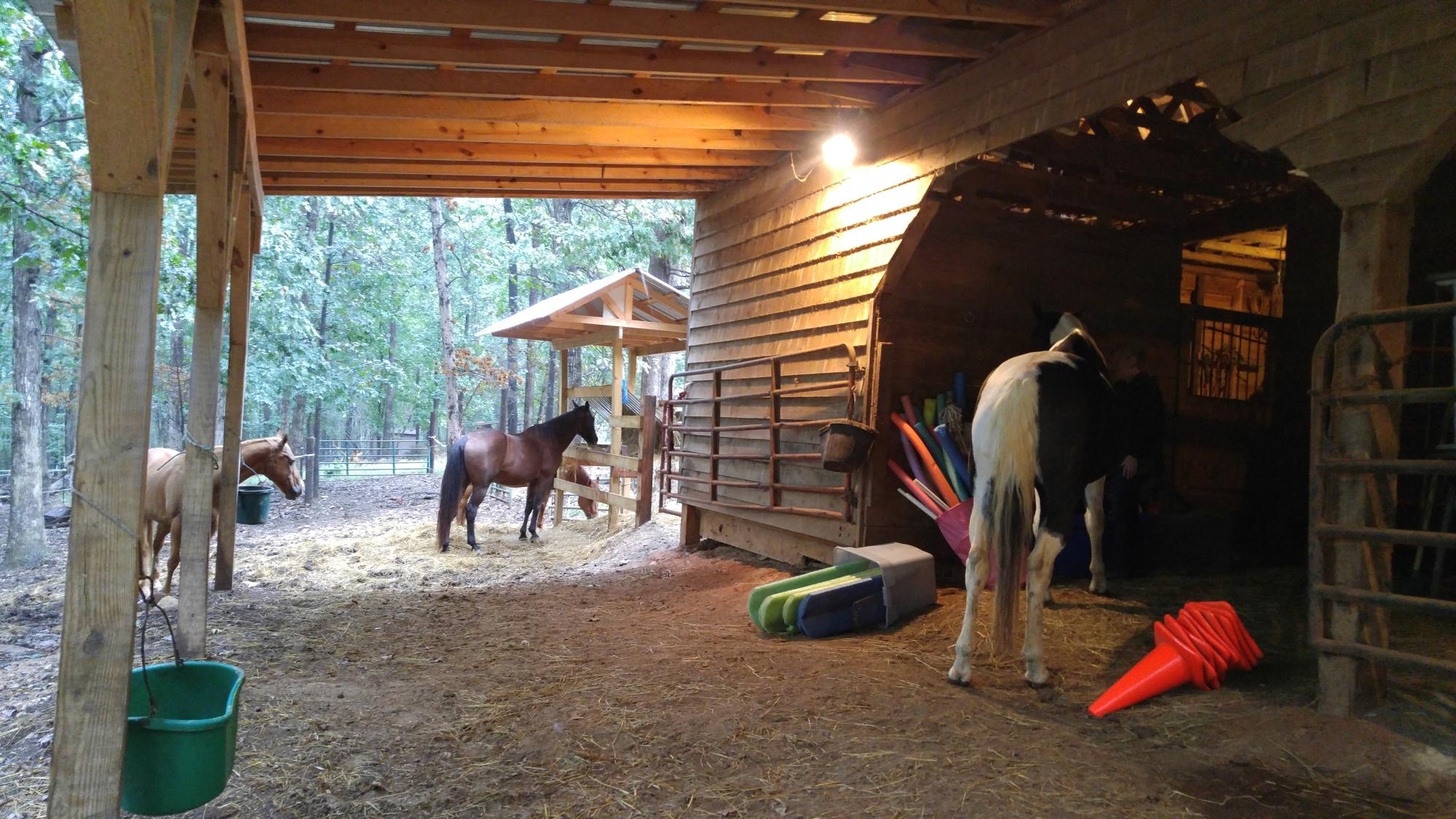EAGALA_Therapy_under_the_Lights_-_Willow_Equine_NC.jpg