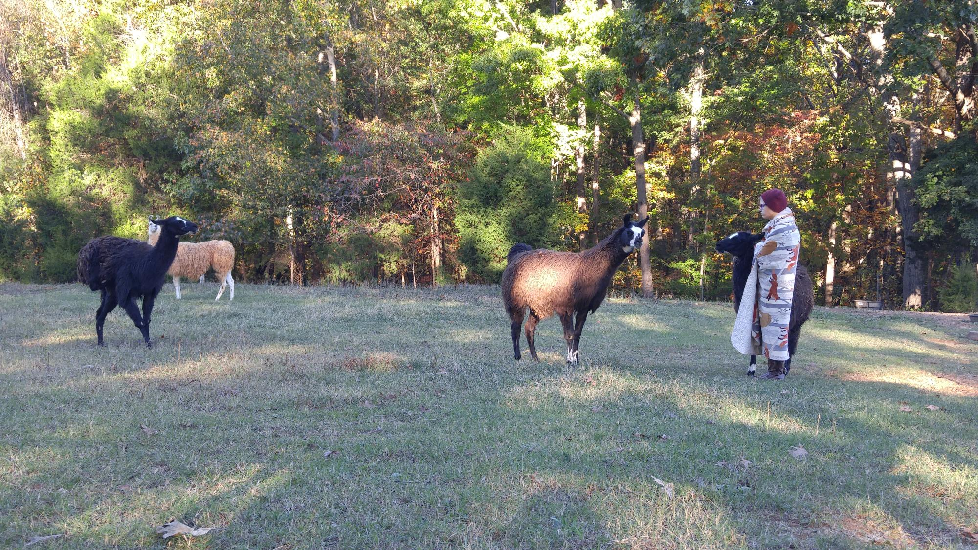 Llama_Assisted_Therapy_-_Willow_Equine_NC.jpg