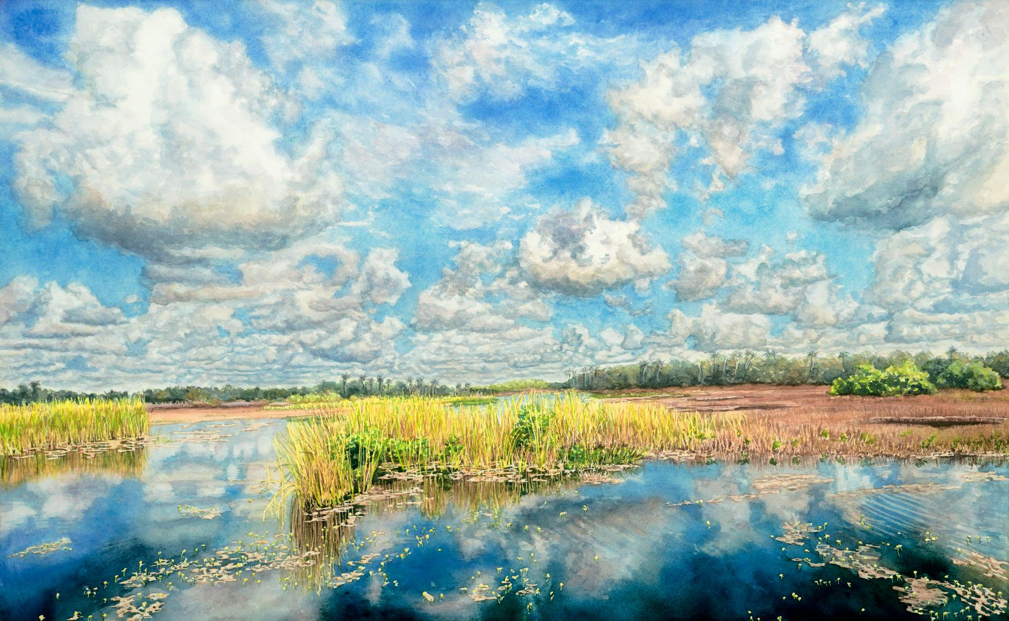 Everglades Reflections #4
