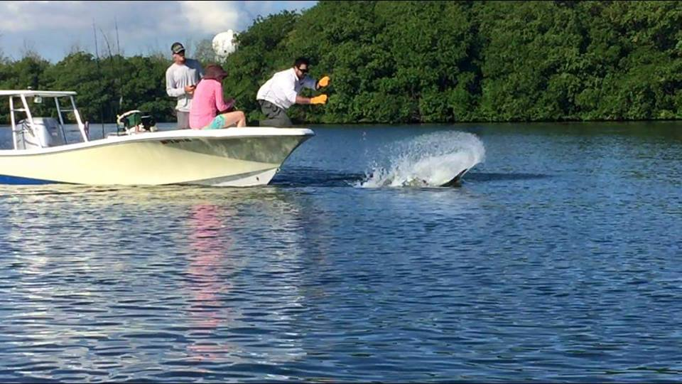 BIG TARPON DOING A TAIL SPRAY