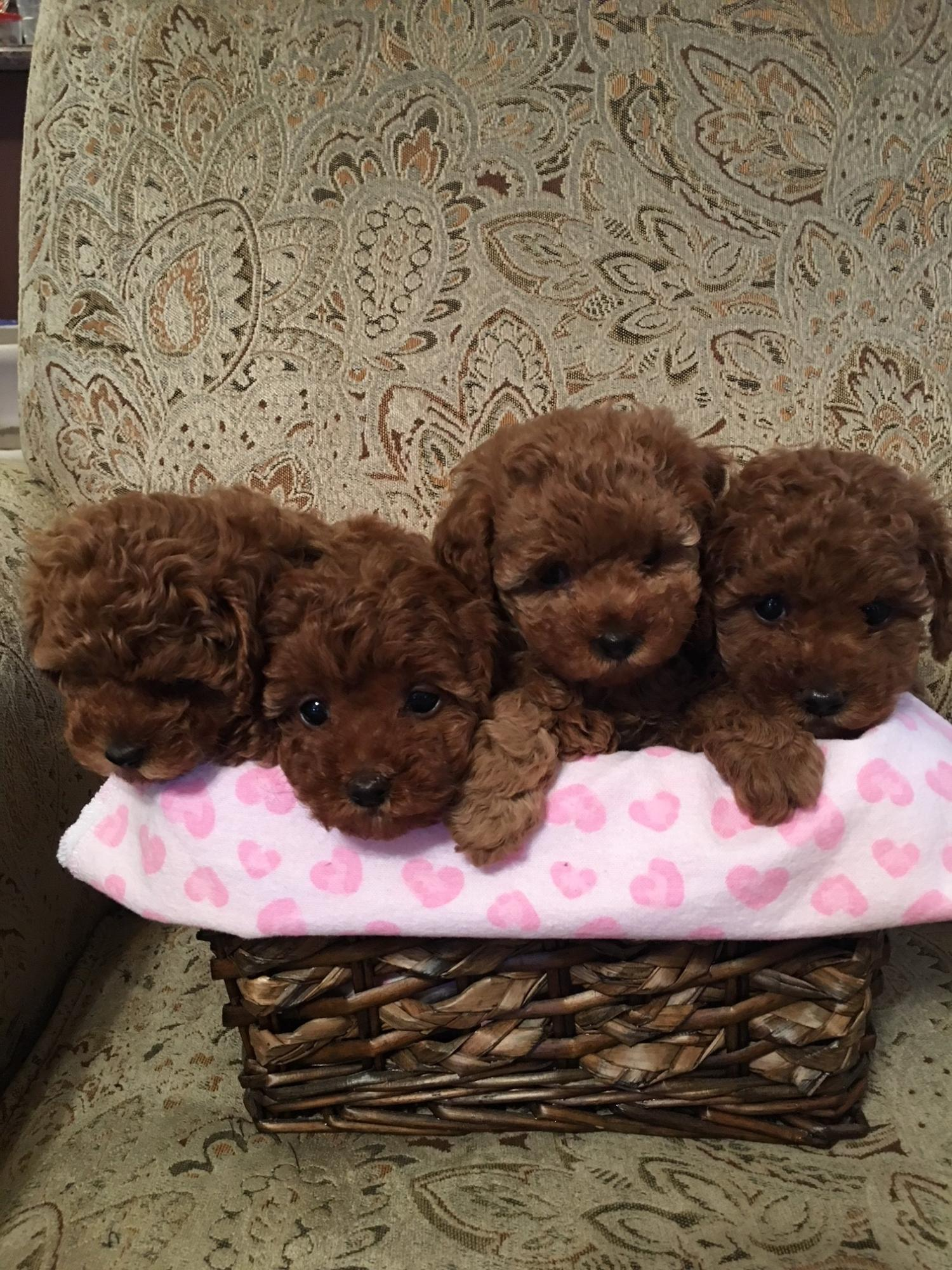 4pups_basket70479.JPG