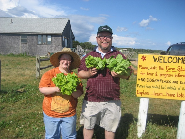 Amanda and Greg harvesting lettuce