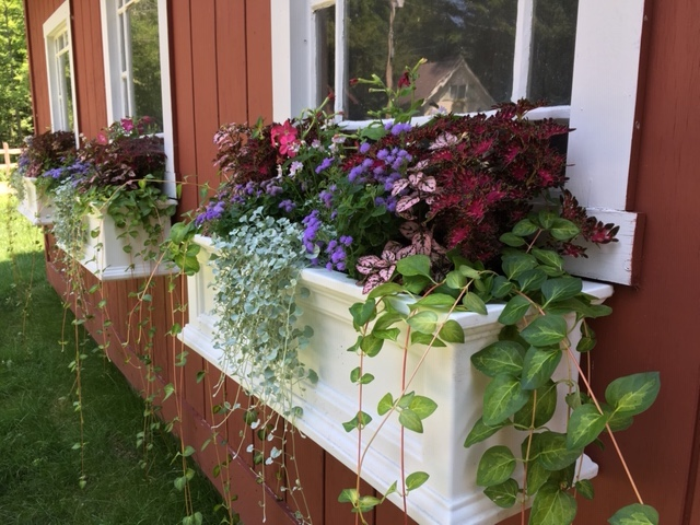 window boxes for part sun