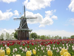 ft_windmill-resize.jpg