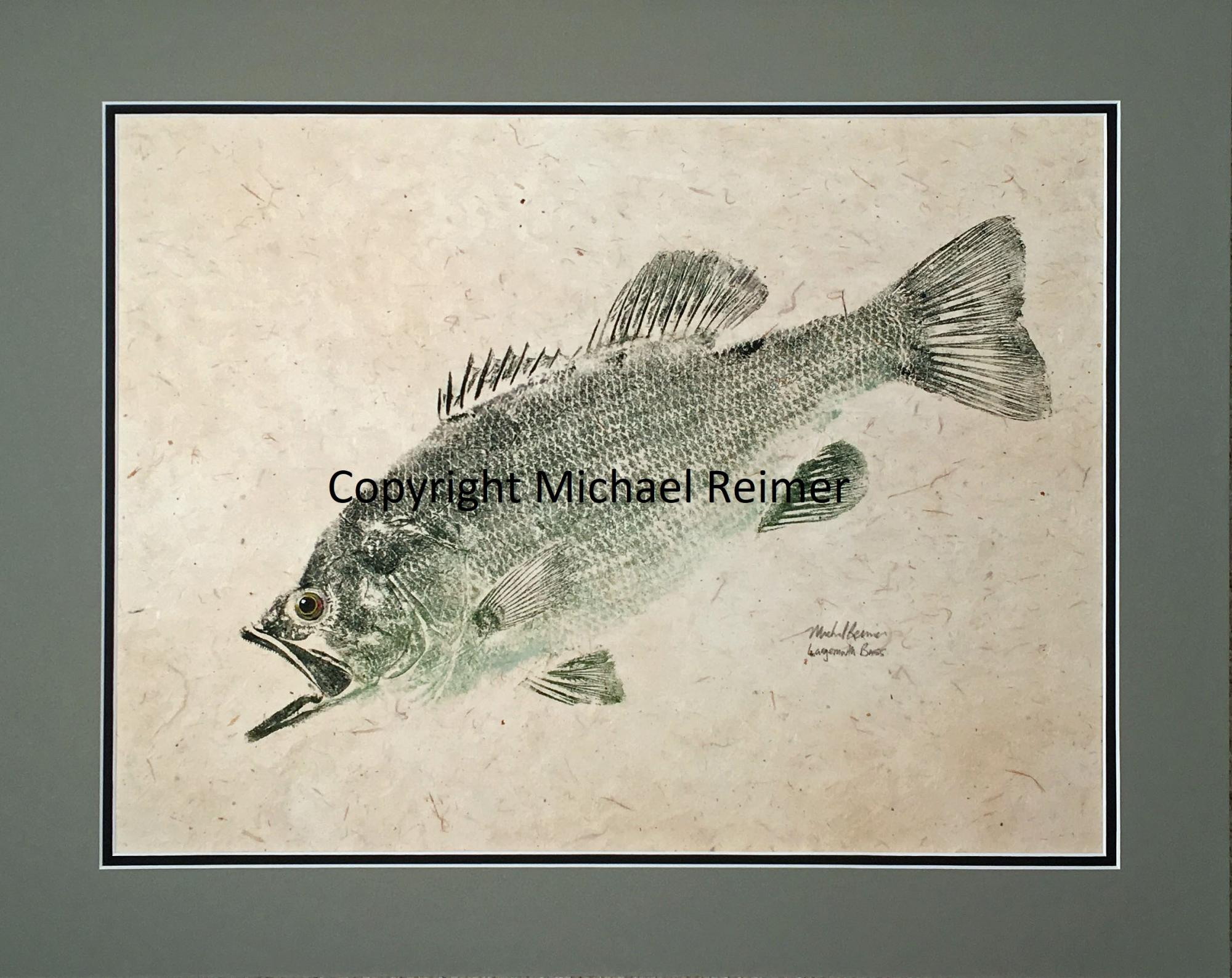 1620-410_Largemouth_Bass.jpg