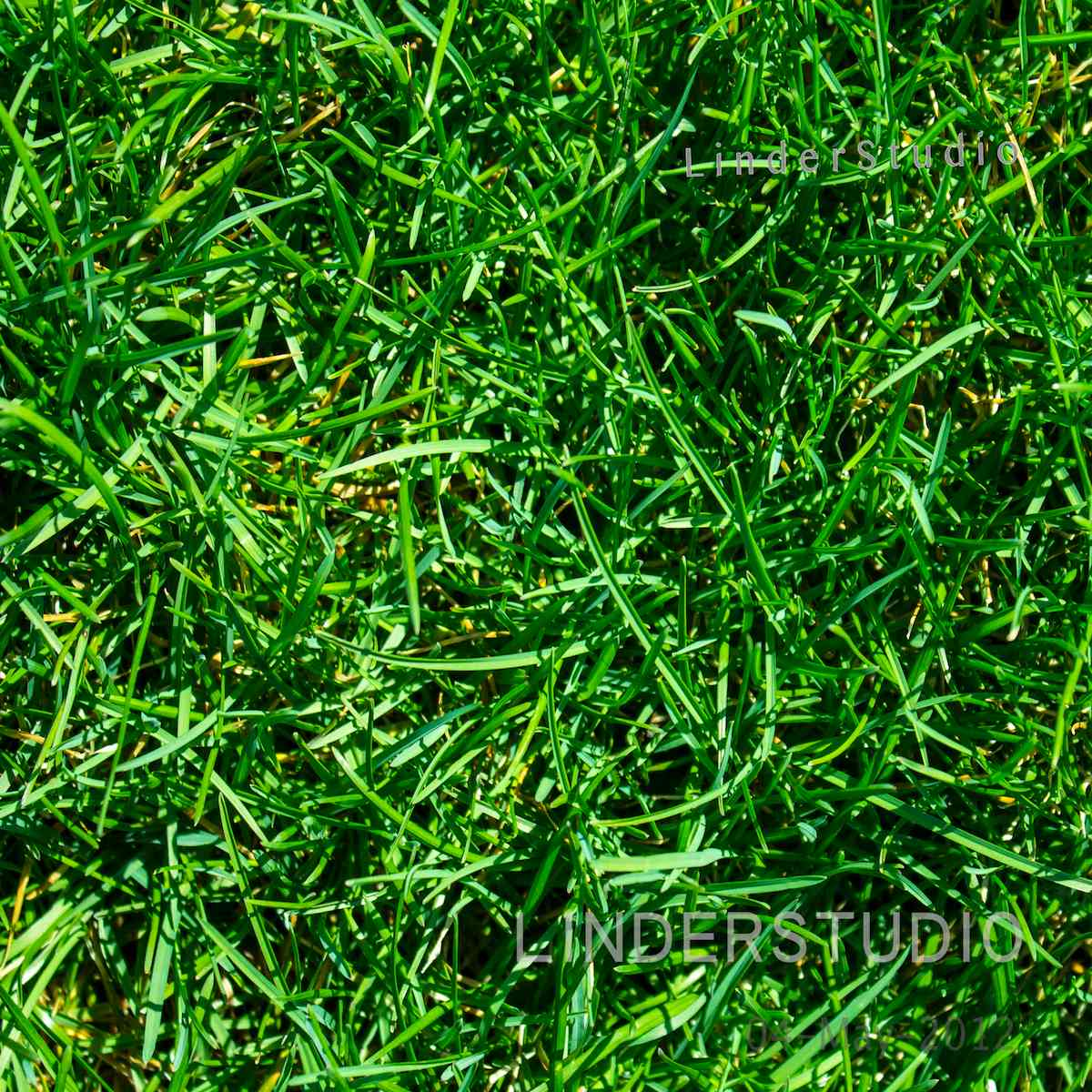 patch_of_grass63113.jpg