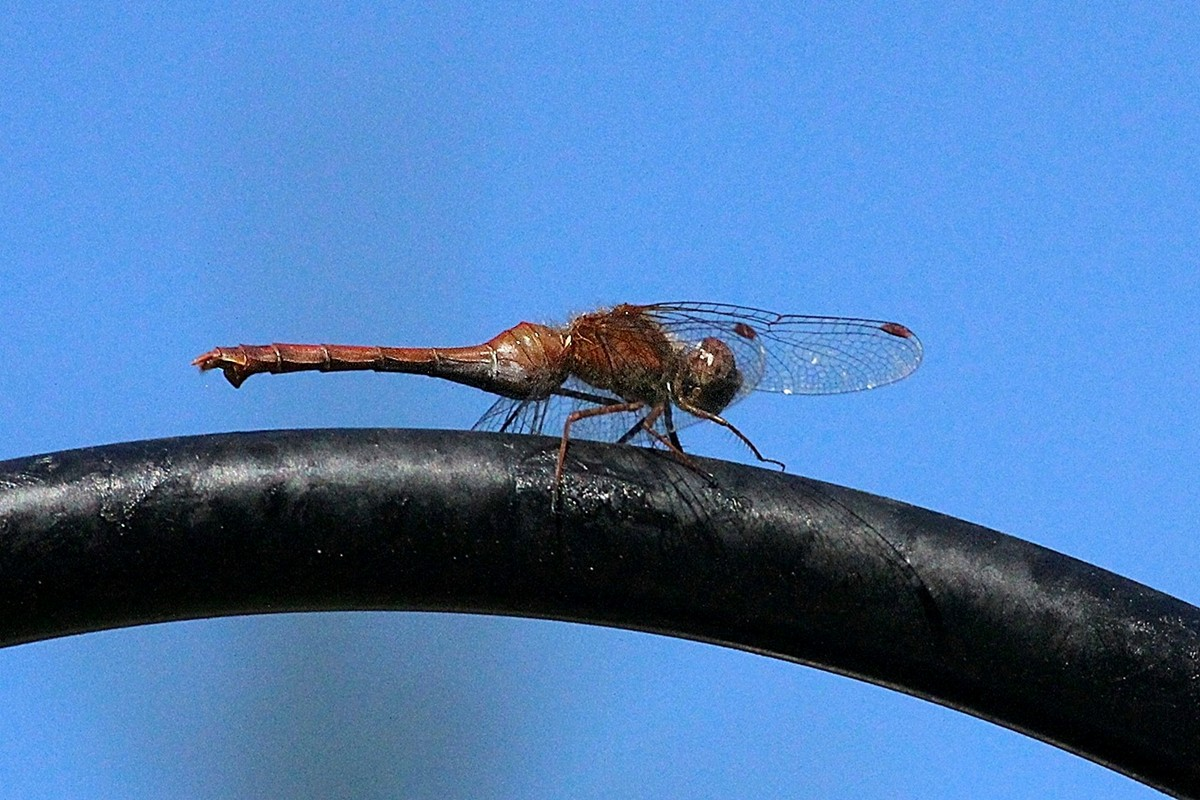Nature_DragonFly_CH__1_.JPG