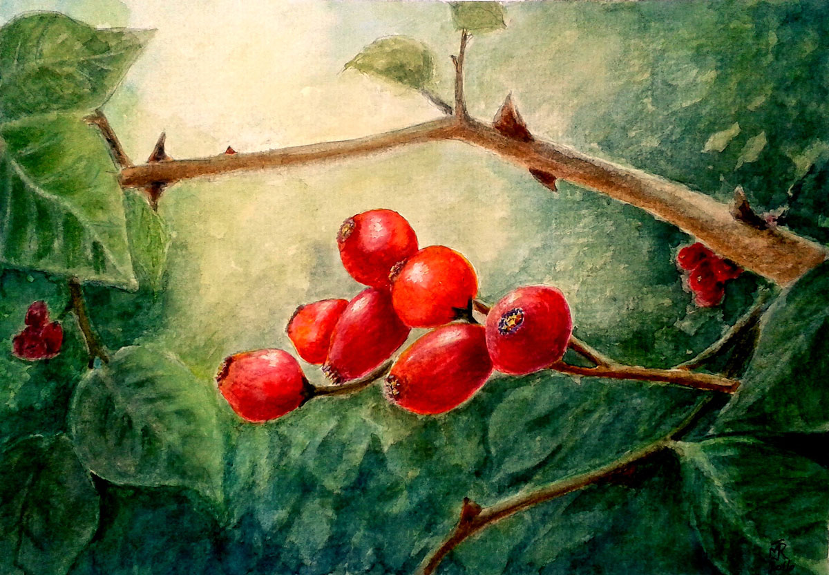"""AUTUMN FRUITS"" 2016_£45 (UF/UM)"