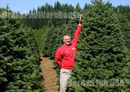 Grass-Pad-Christmas-Trees-9.5.jpg