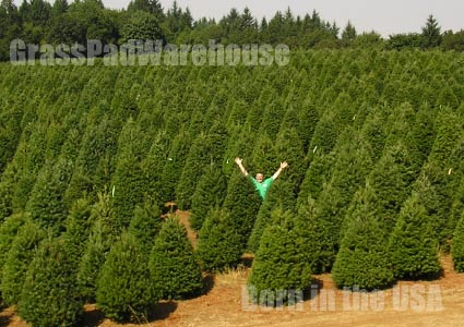 Grass-Pad-Christmas-Trees-9.7.jpg