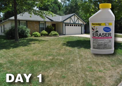 Grass Pad Total Lawn Restoration
