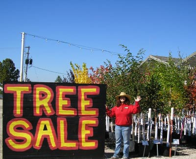 Grass-Pad-Tree-Sale.jpg