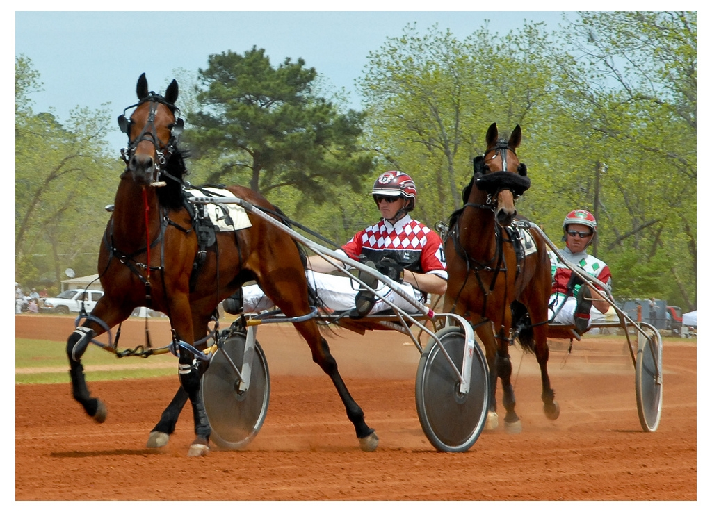dsr_harness_horse_racing.JPG