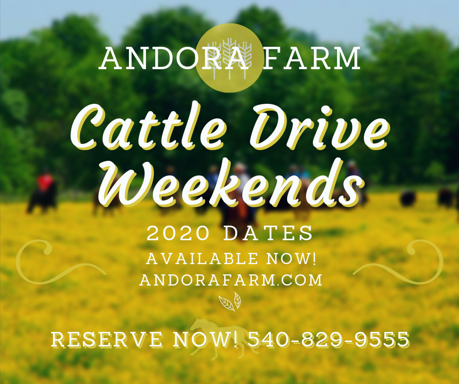 Cattle Drive Weekends at Andora Farm