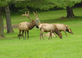 Big Elk Lick Horse Camp, PA