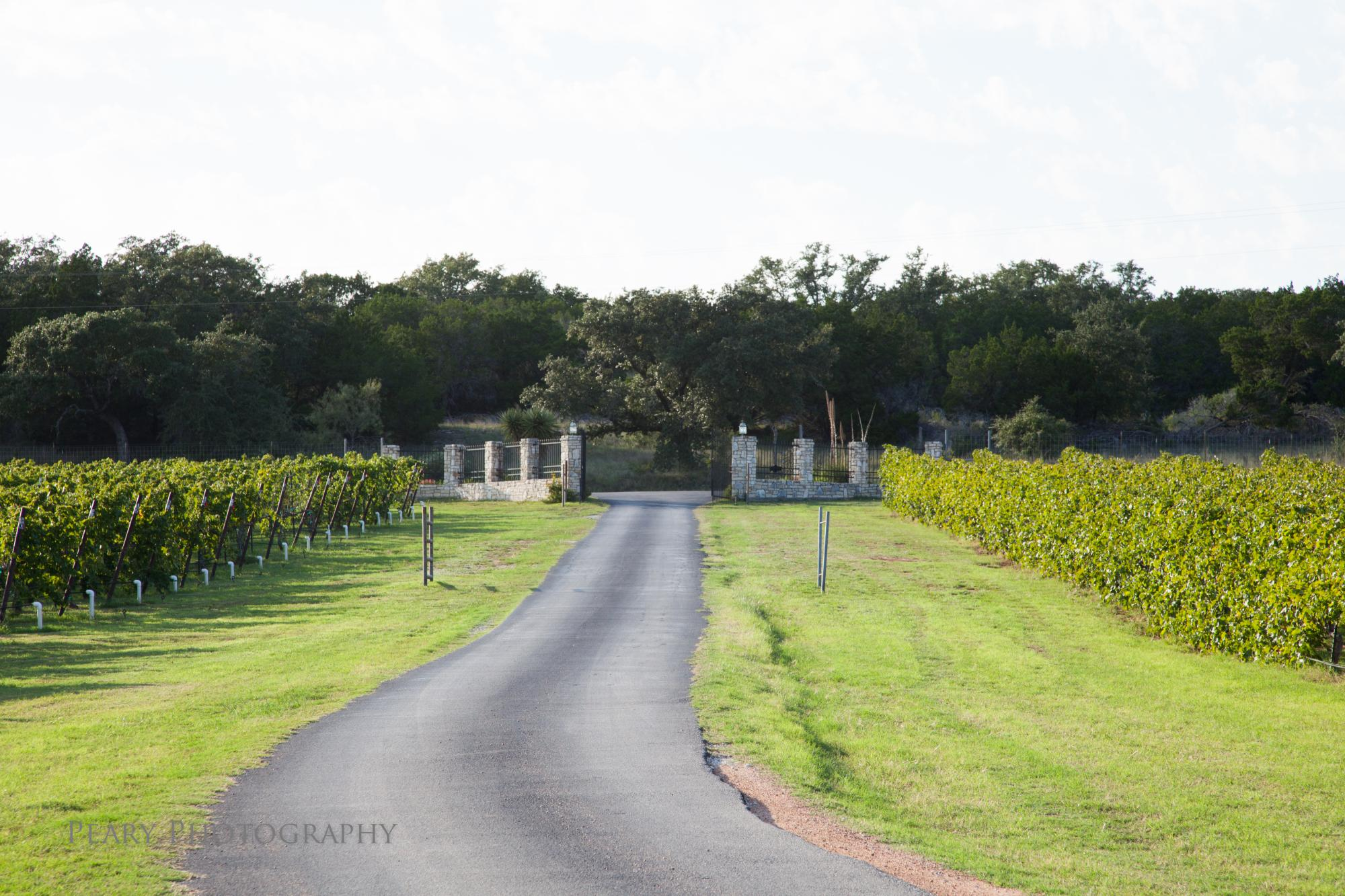 Vineyard_Entrance_2_-_Peary_Photography.jpg