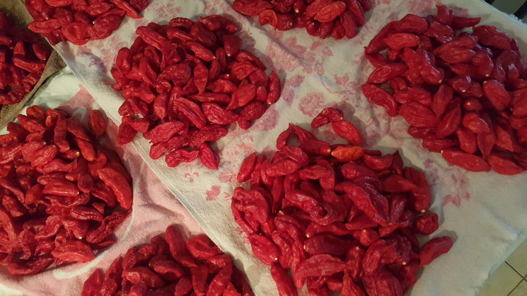 fresh ghost peppers for sale