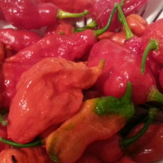 fresh ghost peppers