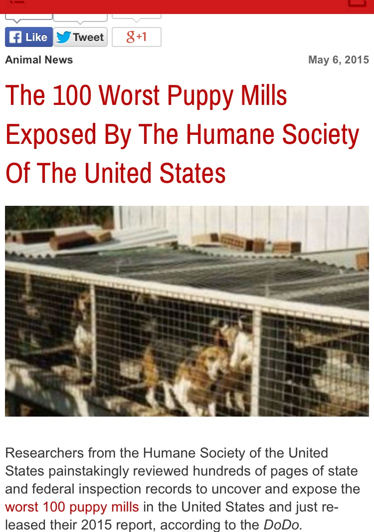 "He was ""discarded"" from one of the 100 worst puppy mills in the nation"