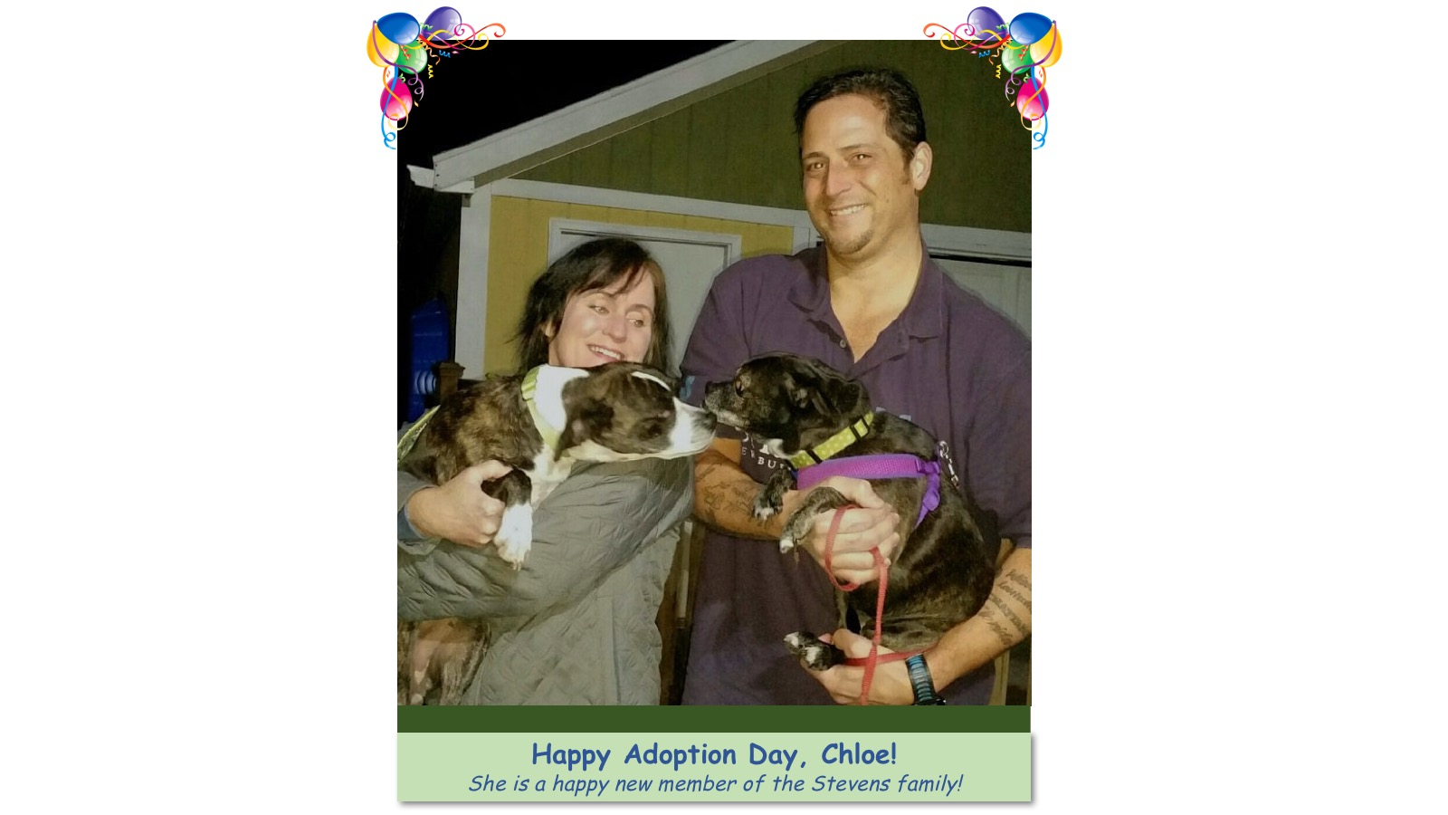 Chloe_Adoption_photo.jpg