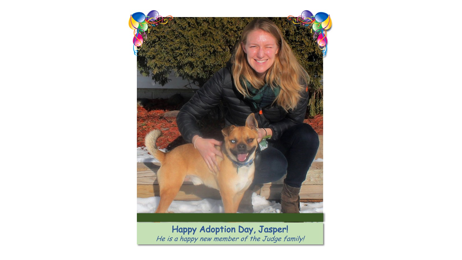 Jasper_Adoption_Photo_2018.jpg