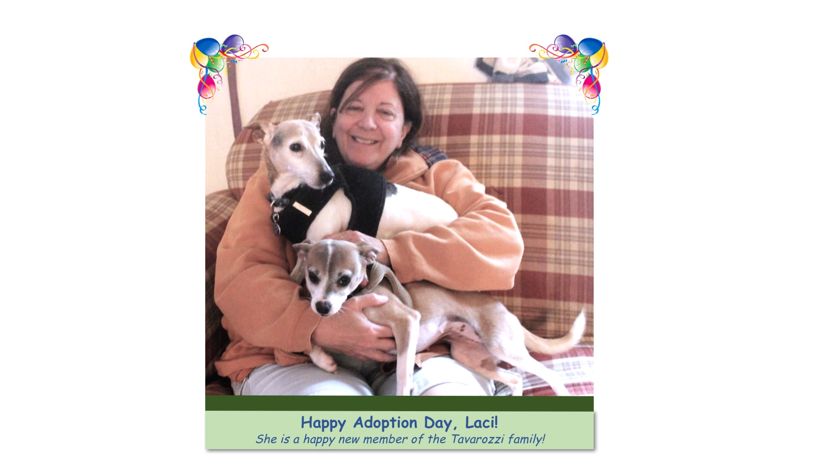 Laci_Adoption_photo.jpg