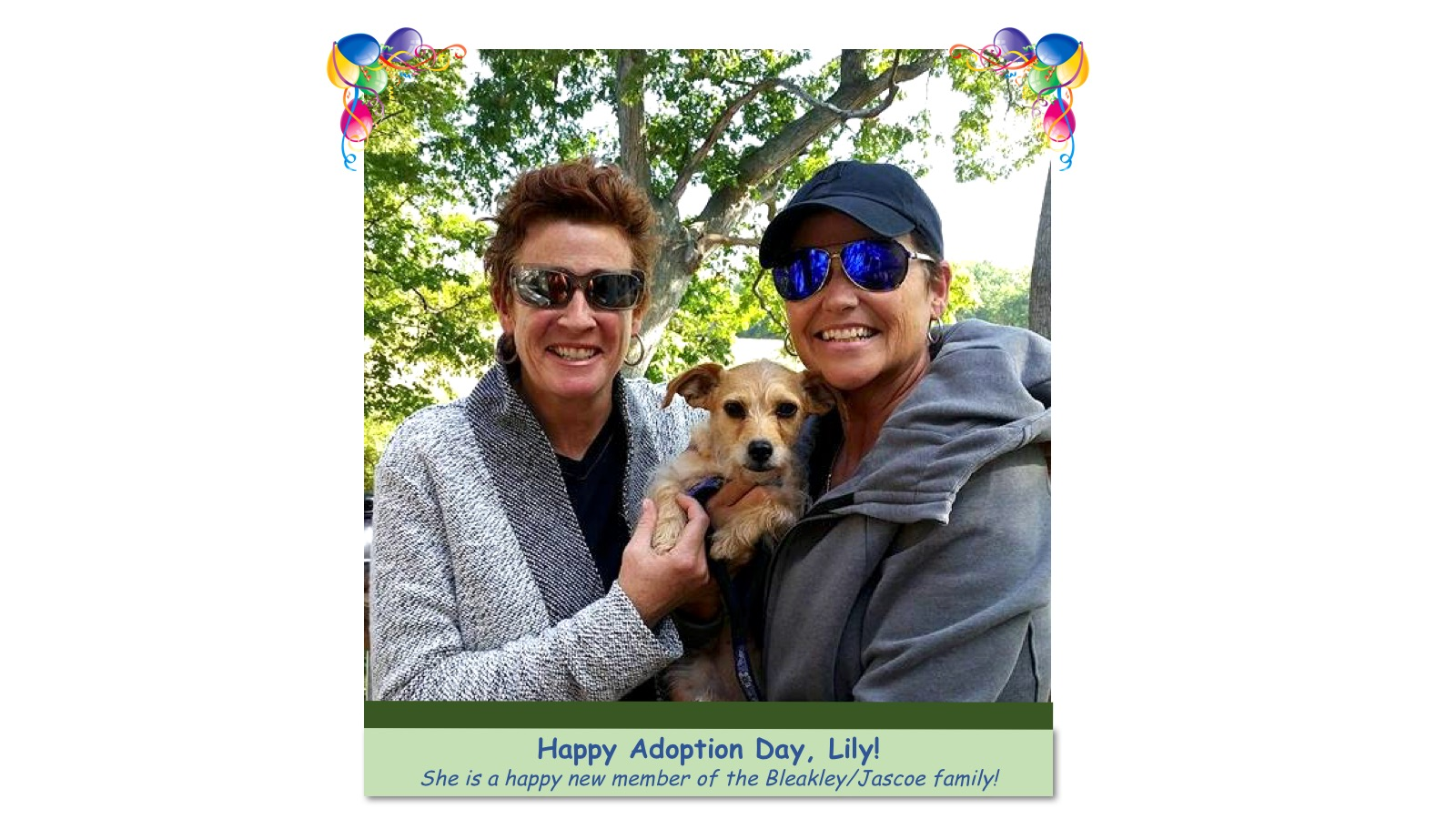Lily_Adoption_photo.jpg