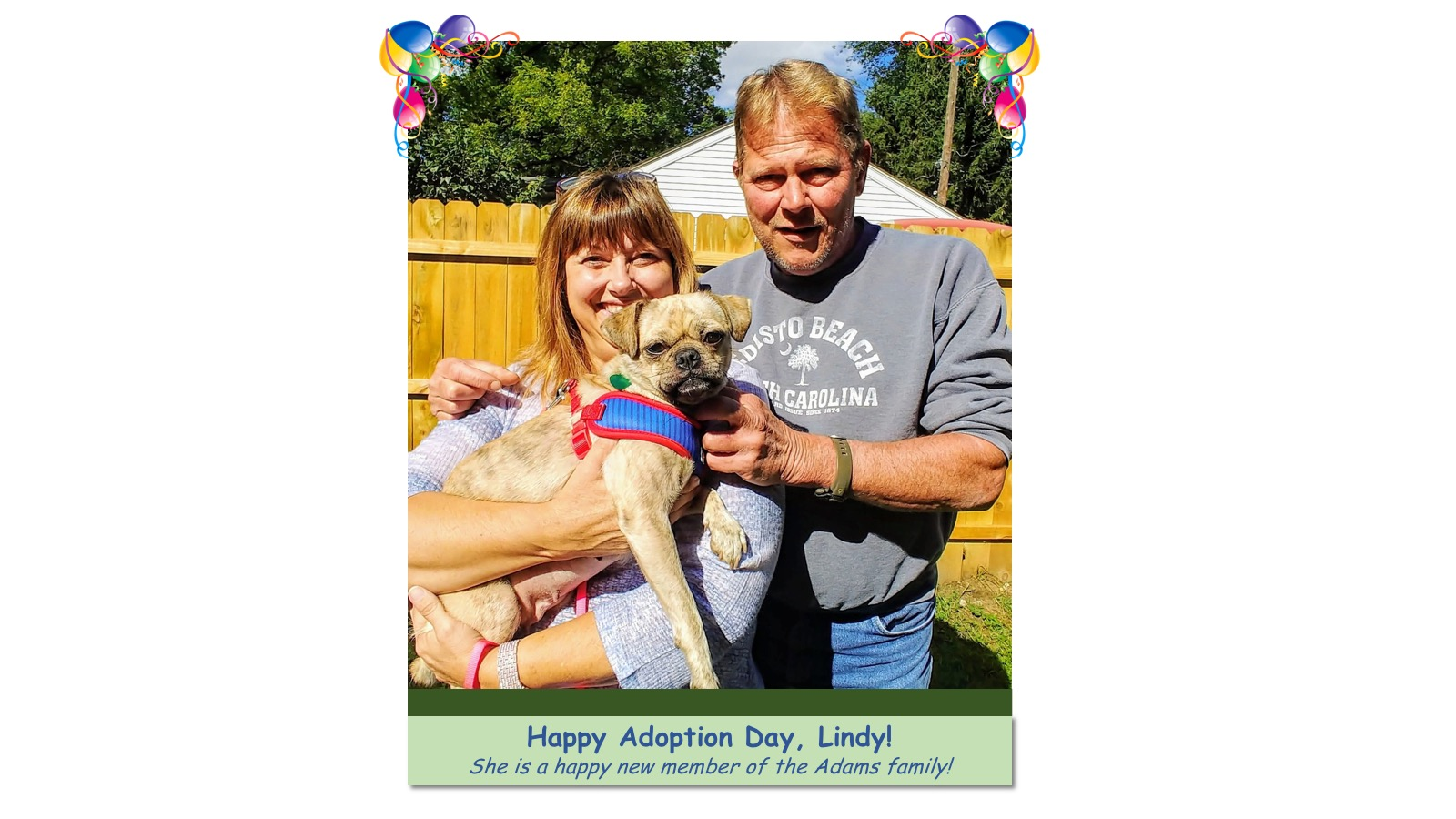 Lindy_Adoption_Photo5183.jpg