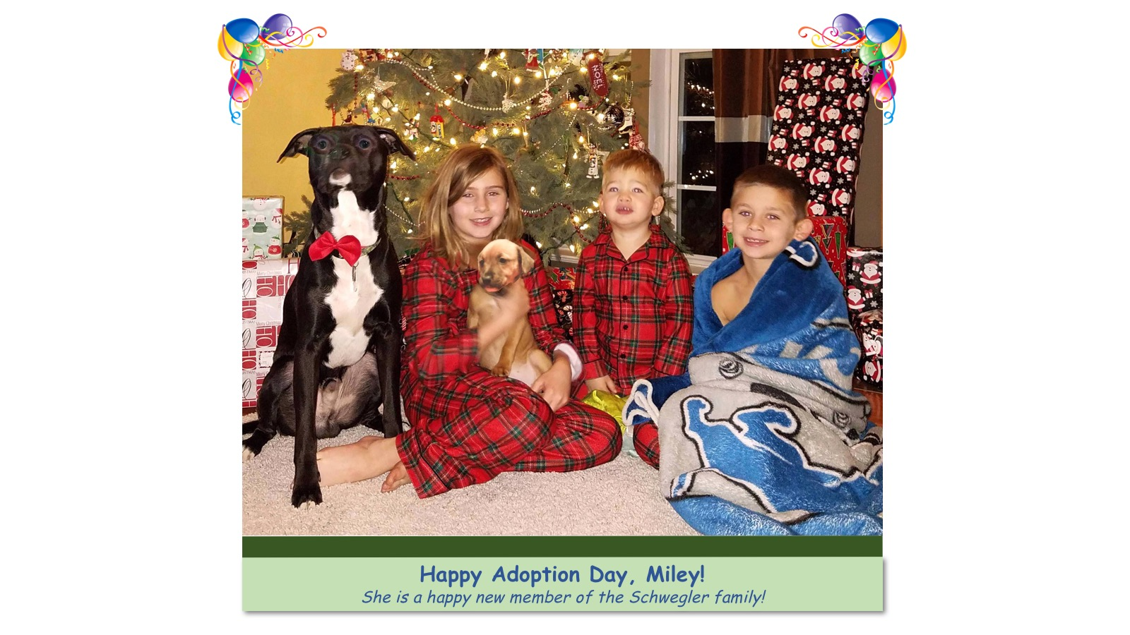 Miley_Adoption_photo.jpg