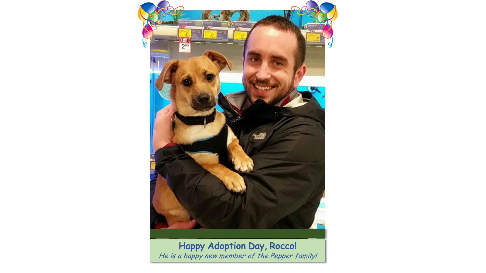 Rocco_Adoption_Photo_2018.jpg