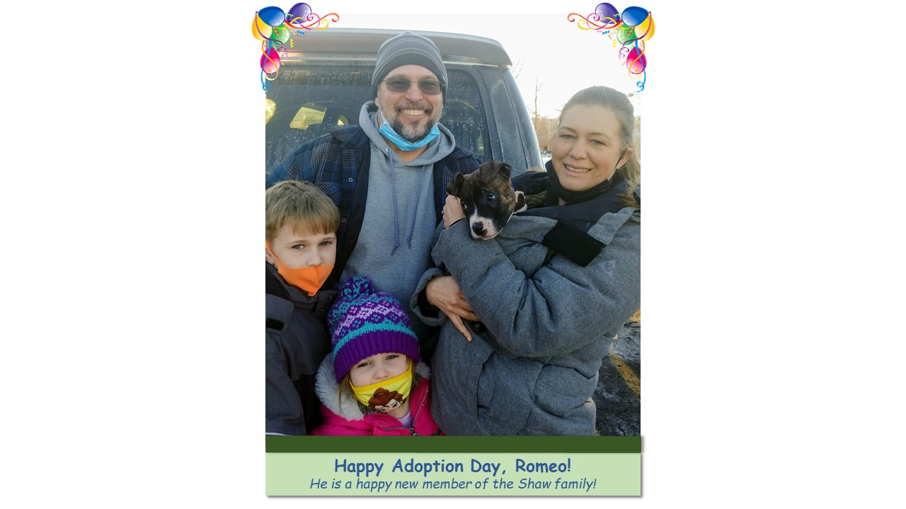 Romeo_Adoption_Photo_2021.jpg