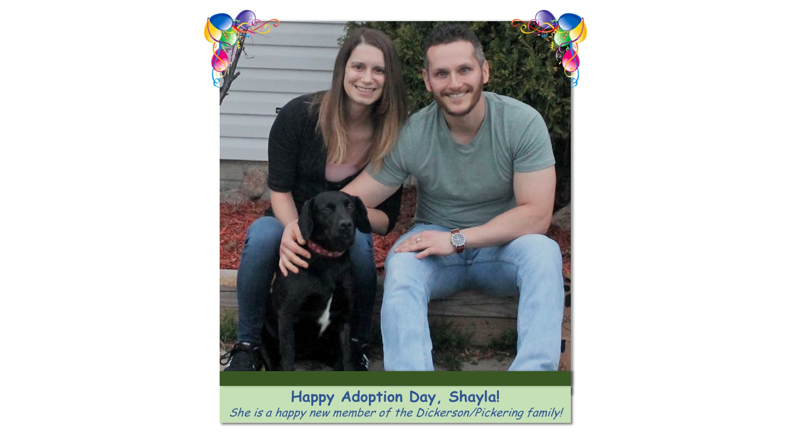 Shayla_Adoption_Photo84274.jpg